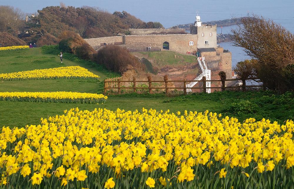 Daffodils (3).jpg