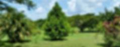 Rock Farm grounds at Belize Bird Resue