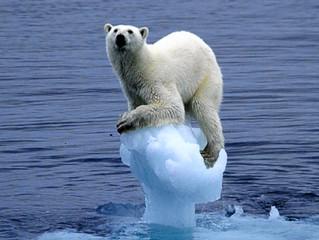 Sustentabilidade corporativa trata apenas de mudanças climáticas?