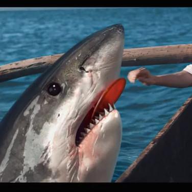 Uludag Gazoz Shark