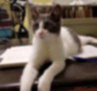 kitty17_edited.jpg