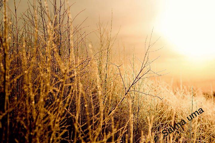 Beautiful winter 🍁🌾🍂