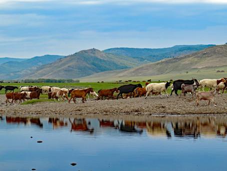 Enjoying life in Mongolia