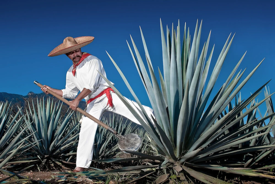 Tequila Tasting experience in Cabo By Na
