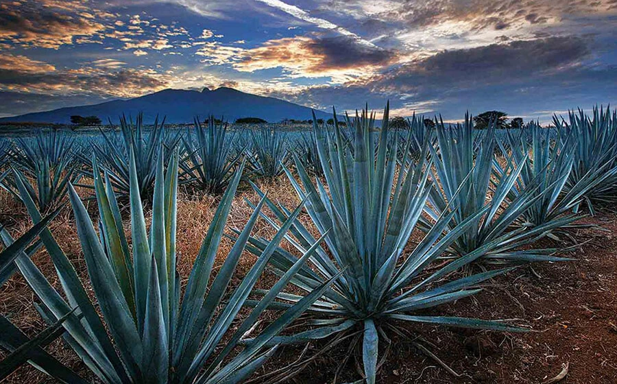 Tequila Tasting Experience By Naay Trave