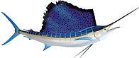 sailfishmount.jpg