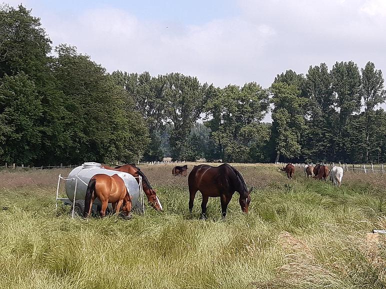 Pferde 2020.4.jpg
