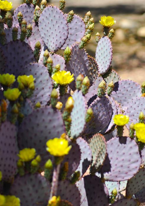Website - Garden Inspiration - 13.jpg