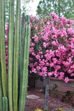 Website - Garden Inspiration - 7.jpg