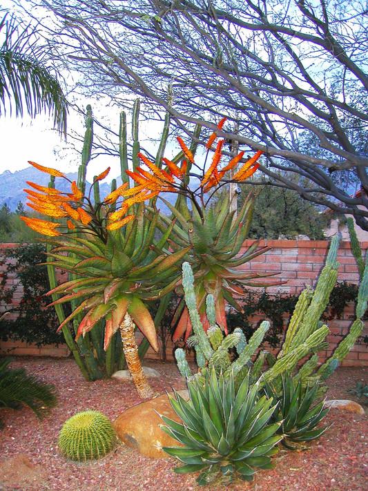 Website - Garden Inspiration - 21.jpg