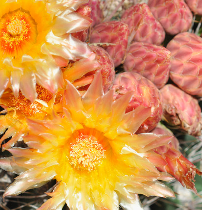 Website - Garden Inspiration - 19.jpg