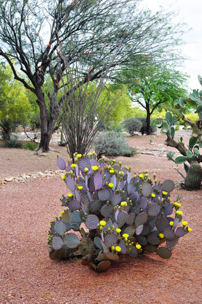 Website - Garden Inspiration - 11.jpg