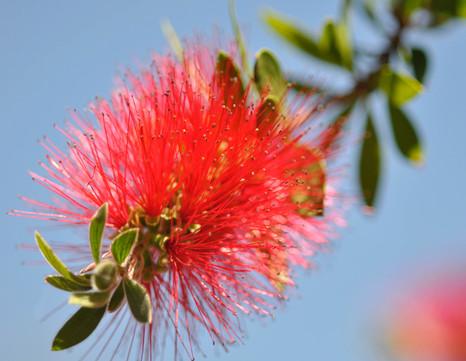 Website - Garden Inspiration - 14.jpg