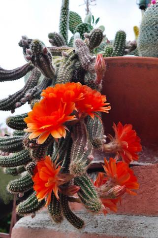 Website - Garden Inspiration - 8.jpg