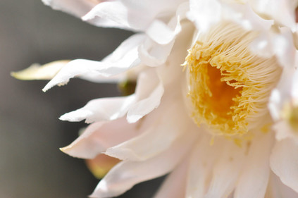 Website - Garden Inspiration - 18.jpg