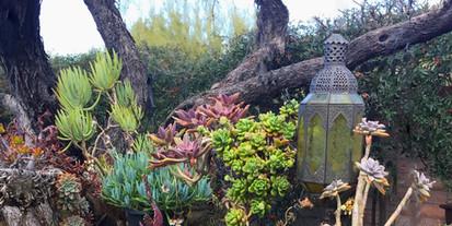 Website - Garden Inspiration - 25.jpg