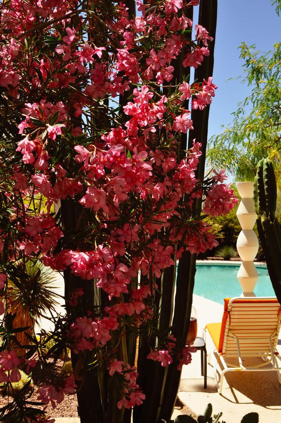 Website - Garden Inspiration - 15.jpg