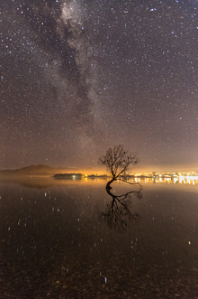 Wanaka Tree Night.jpg