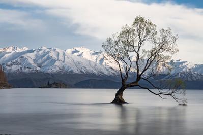 Wanaka Tree (Day).jpg