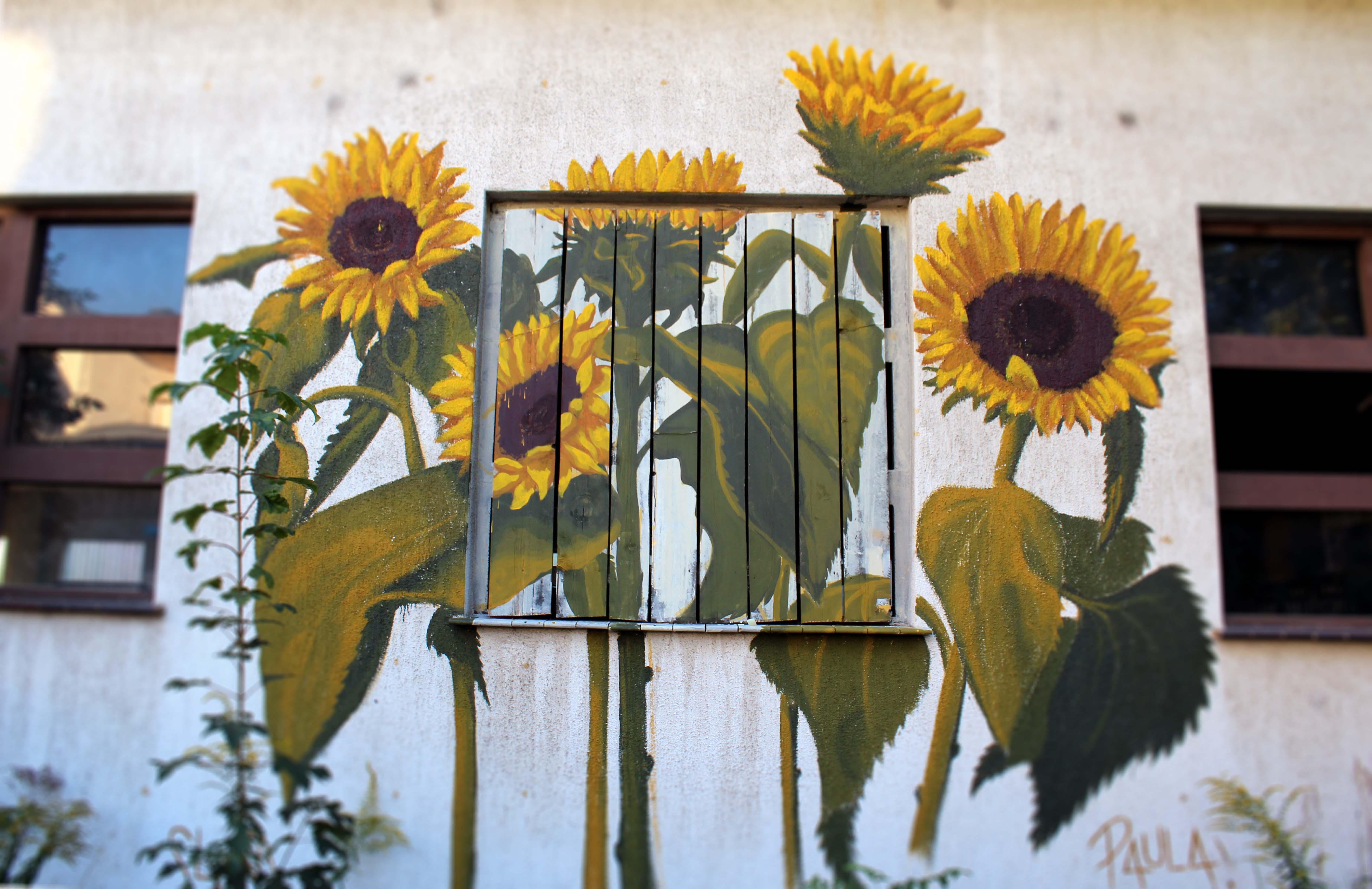 Sunflowers. with Paula Reichertz