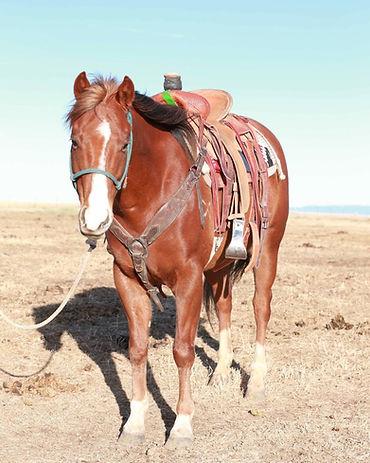 CA Red Rock, Sorrel Quarter Horse