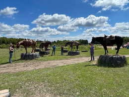Four carter horses