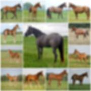 Sterling Progeny mosaic.jpg