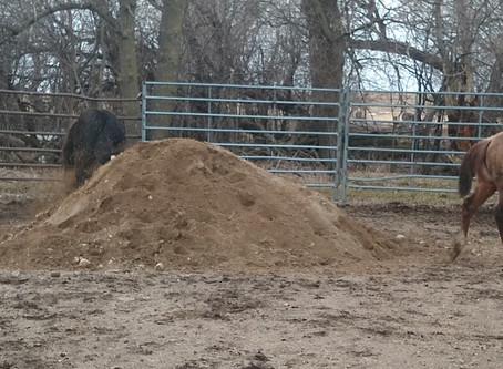 Sandbox Fun!    Some exceptional fillies enjoying some time in the sandbox....just like kids!