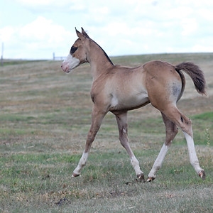 2016 Foals