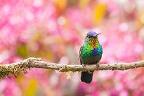 cute-beautiful-hummingbird-photography-17.jpeg