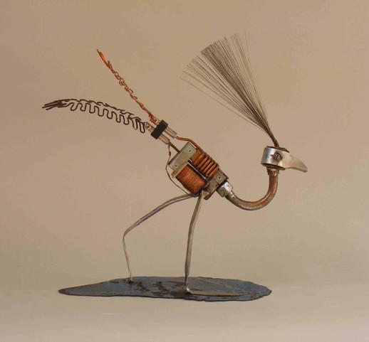 Showy Bird