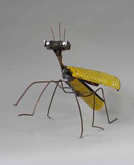Yellow Burner Bug