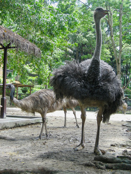 0415 Bird World