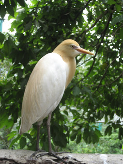 0415 Bird World (2)