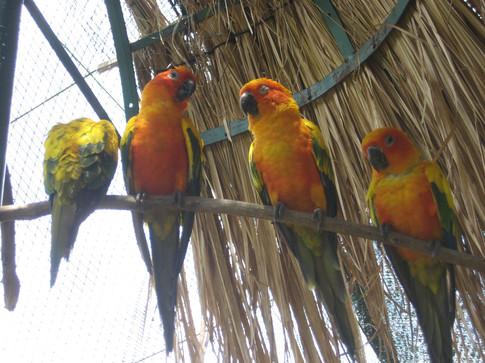 0415 Bird World (4)