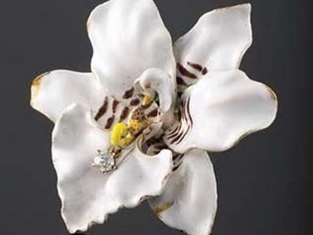 Tiffany's orchids from Paul Farnham