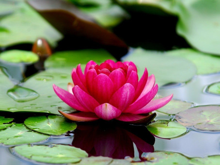 The Lotus Flower in Jewelry Design