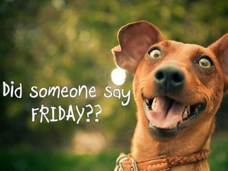 Hello Friday: Take Your Dog To Work Day!