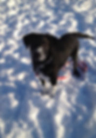 Playing in the snow with Odin :)