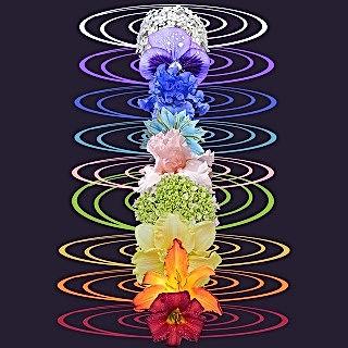 Chakra spiritual flowe1a.jpg