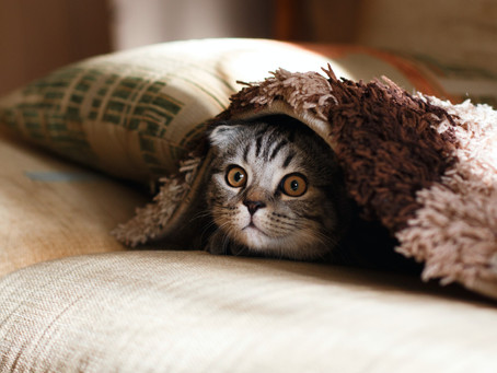 Worried about leaving your cat after lockdown? Homeopathic Vet Ingrid Anderson gives us some tips...