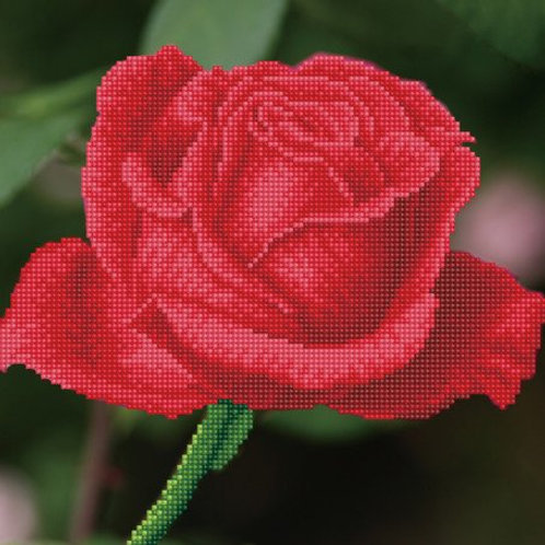 DD Rose Bud 30,5x30,5 cm