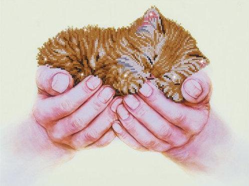DD Predious Kitten 52x40 cm