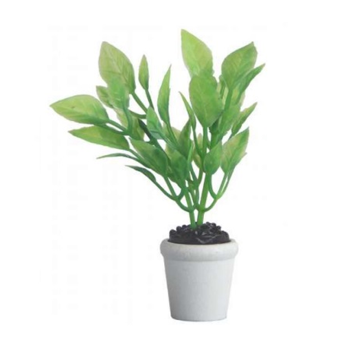Grünpflanze im Topf, 5-7cm