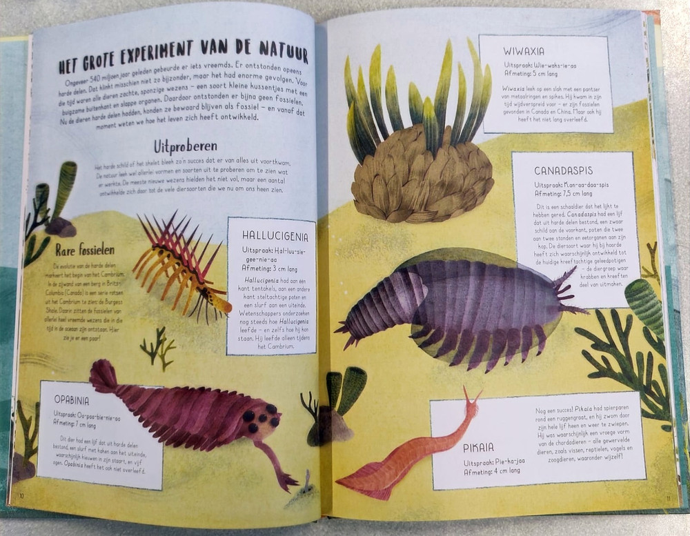 De walvis begon aan wal informatieboek