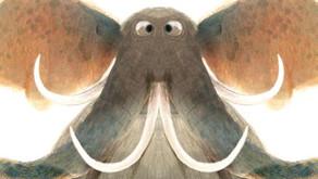 Raar | De magie van symmetrie