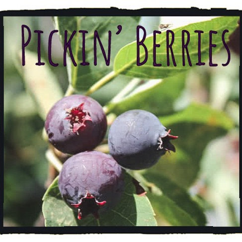 Pickin' Berries