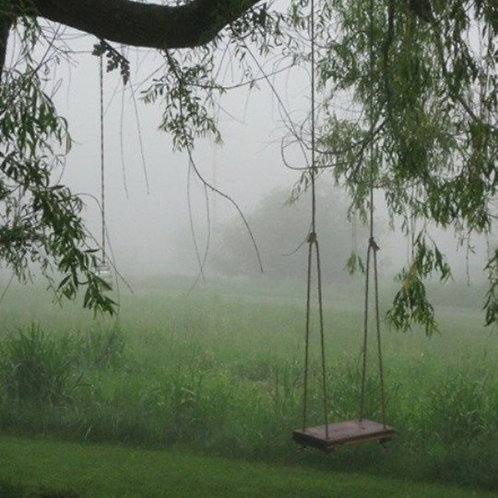 The Old Rope Swing