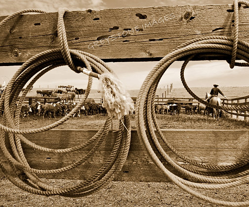 Through the Ropes