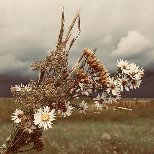 Prairie Winds